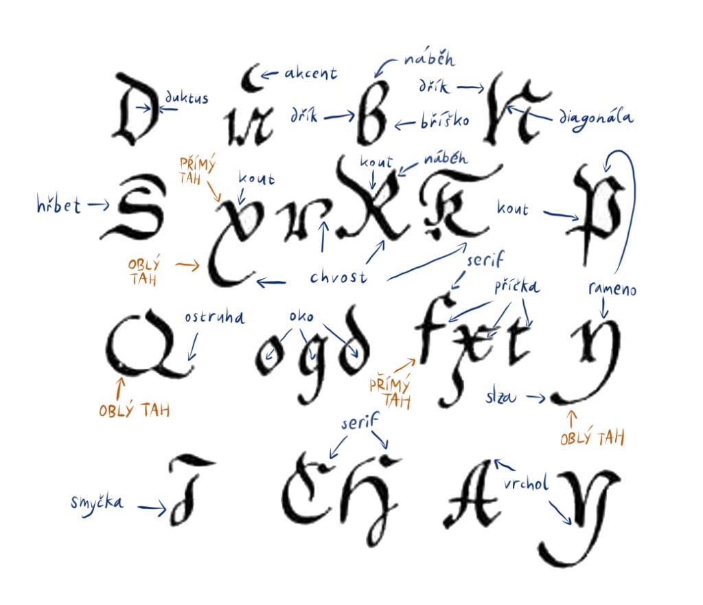 anatomie-pisma-nazvoslovi